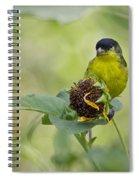 Lesser Goldfinch  Spiral Notebook
