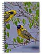 Lesser Masked Weaver Spiral Notebook