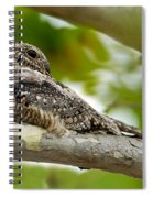 Lesser Nighthawk On Branch Spiral Notebook
