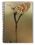 Lesser Spotted Fritillary Spiral Notebook