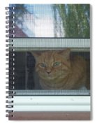 Let Me Out Cat Picture Spiral Notebook