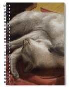 Let Sleeping Kitties Lie Spiral Notebook