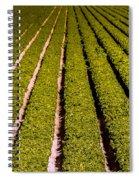 Lettuce Farming Spiral Notebook