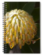 Leucospermum  -   Yellow Pincushion Protea Spiral Notebook