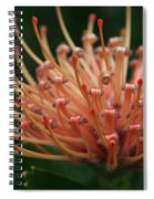 Leucospermum  Pincushion Protea Tropical Sunburst Protea Flower  Spiral Notebook