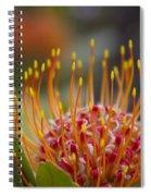 Leucospermum Pincushion Protea - Tropical Sunburst Spiral Notebook