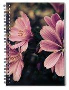 Lewisia Flowers - 7 Spiral Notebook