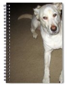 Liberty The Dog And Her Ball Spiral Notebook