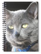 Library Cat Spiral Notebook