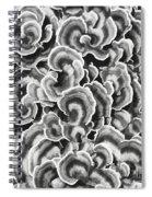 Lichen Abstract Spiral Notebook