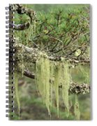 Lichens On Tree Branches In The Scottish Highlands Spiral Notebook