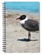 Lido Gull Spiral Notebook