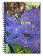 Life Among The Stars Spiral Notebook