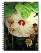 Life And Death In The Garden Spiral Notebook