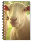 Light And Peace Spiral Notebook
