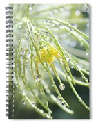 Light Catchers Spiral Notebook