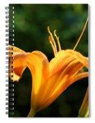 Light Funnel Spiral Notebook
