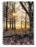 Light In The Trees Spiral Notebook