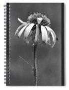 Light Of Day In Black And White Spiral Notebook