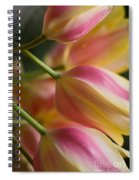 Light Of Spring Spiral Notebook
