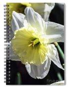 Light Of The Sun Spiral Notebook