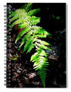 Light Play On Fern Spiral Notebook