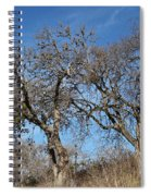 Light Posts And Trees Spiral Notebook