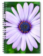 Light Purple Daisy  Spiral Notebook