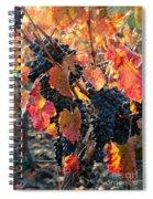 Light Through Fall Vineyard Spiral Notebook