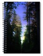Light Through The Forest Spiral Notebook