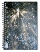 Light Throught The Trees Spiral Notebook