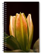 Lighten Up Spiral Notebook