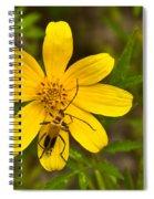 Lightning Bug On Flower Spiral Notebook