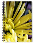 Like Bombs Bursting In Air Spiral Notebook