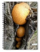 Like Peas In A Pod Spiral Notebook