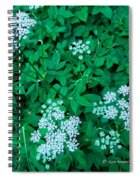 Like Queen Annes Lace Spiral Notebook