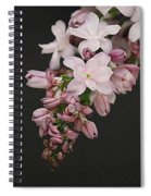 Lilac On Black Spiral Notebook