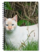 Lilac Point Siamese Cat Spiral Notebook
