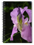Lilac Siberian Iris Spiral Notebook