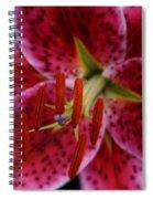 Lilium Pink Stargazer Spiral Notebook