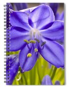 Lilly Of The Nile Spiral Notebook