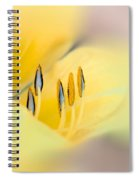 Lily Impressions Spiral Notebook