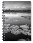 Lily Pads In The Glades Black And White Spiral Notebook