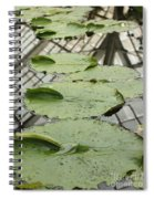 Lily Pads With Reflection Of Conservatory Roof Spiral Notebook