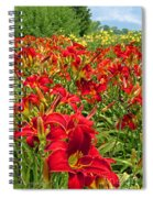 Lily Patch Spiral Notebook