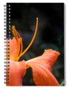 Lily Showing Pistil And Anthers Spiral Notebook