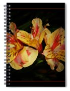 Lily Trio Spiral Notebook