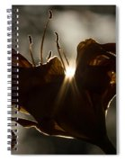 Lily's Light Spiral Notebook