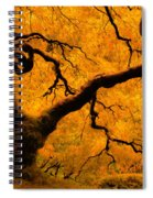 Limned In Light Spiral Notebook