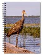 Limpkin Bird Spiral Notebook